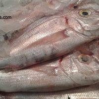 Pagell, peix de Cambrils