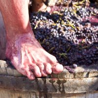Festa del vi a Poboleda
