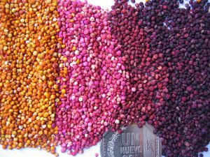 Colors de la quinoa
