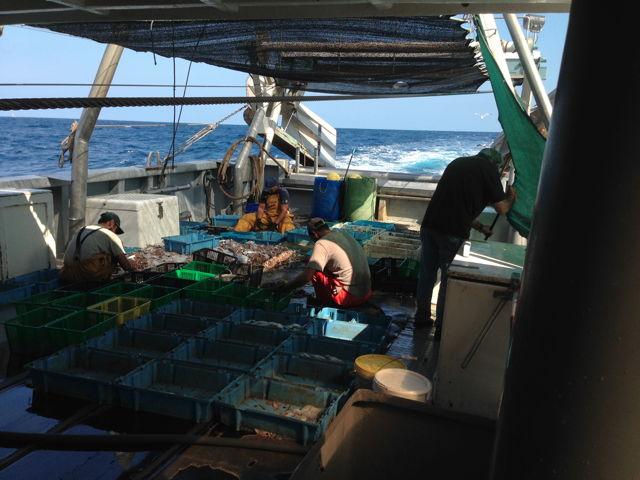 Cambrils barques de pesca arrossegament