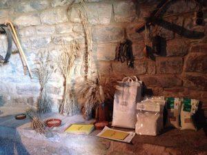 mas terricabras espigues de blat forment