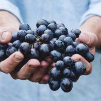 33a Mostra del Vi de l'Empordà