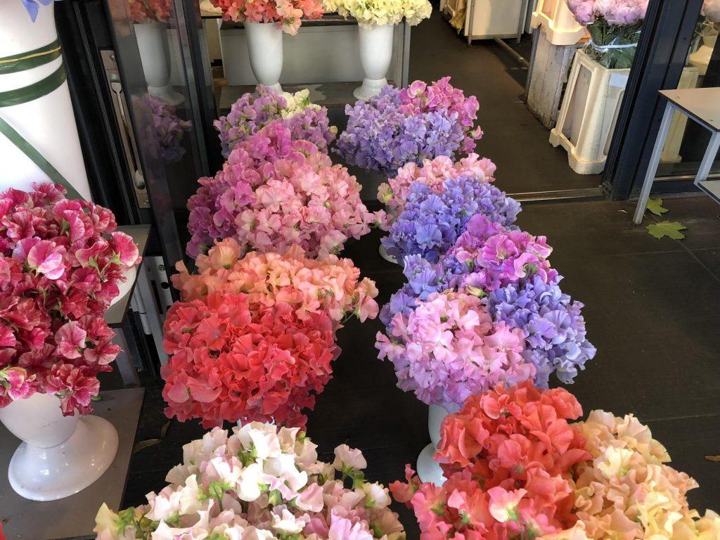 Flors de pèsols a Letònia